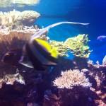 Südseefische im New York Aquarium